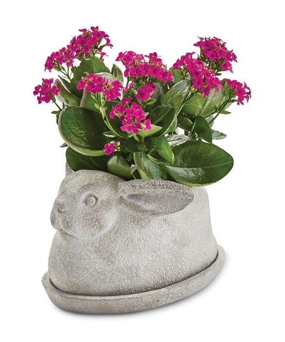 9638: Bunny Planter with Saucer (Product Detail)