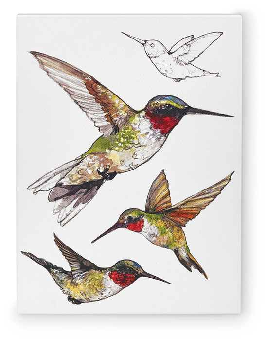 9825: Field Guide Wall Art - Ruby-Throated Hummingbird (Product Detail)