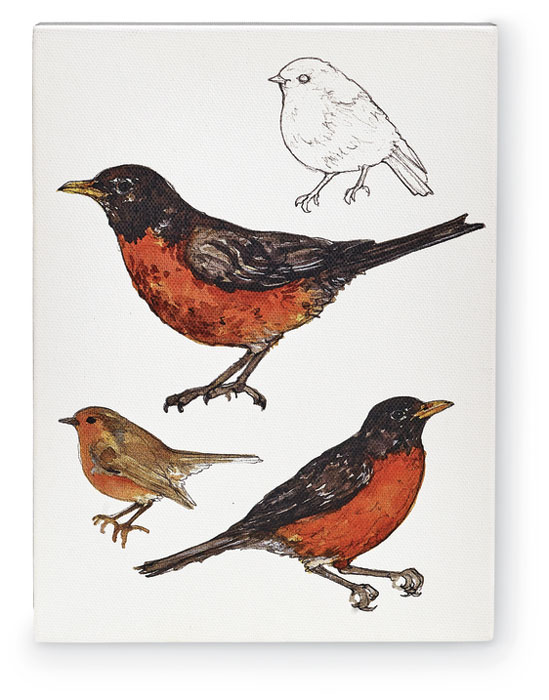 9826: Field Guide Wall Art - American Robin (Product Detail)