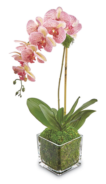 9322: Phalaenopsis Orchid in Glass Vase - Striped (Product Detail)