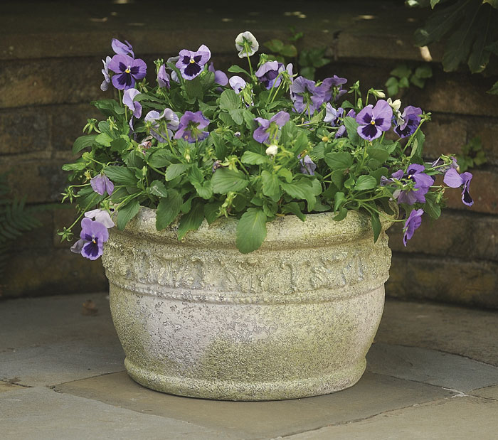 9191: Pansies Pot (Product Detail)