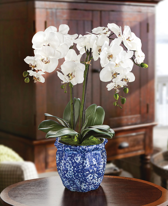 1615: Phalaenopsis Orchid in a Ming Pot (Product Detail)