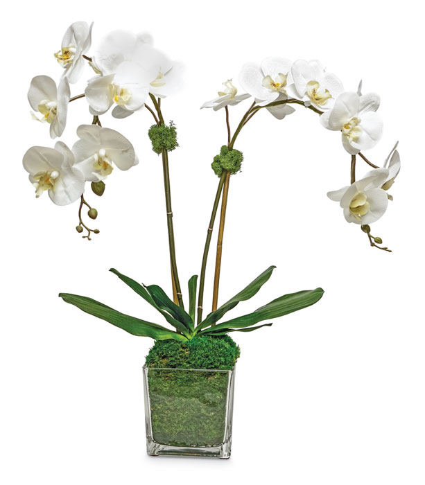 1083: Phalaenopsis Double Orchid in Glass Vase - White (Product Detail)