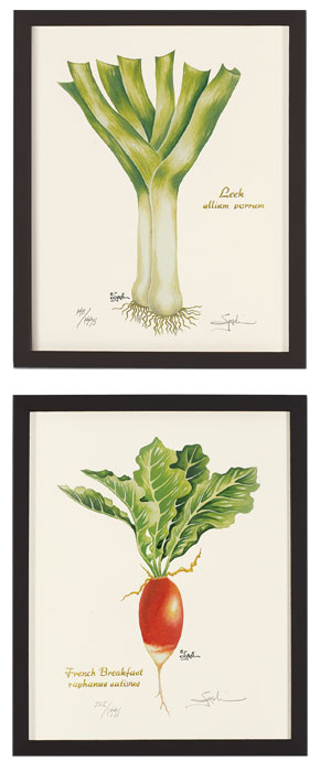 4747: Veggie Prints 1 - Leek and Radish (Set of Two) (Product Detail)