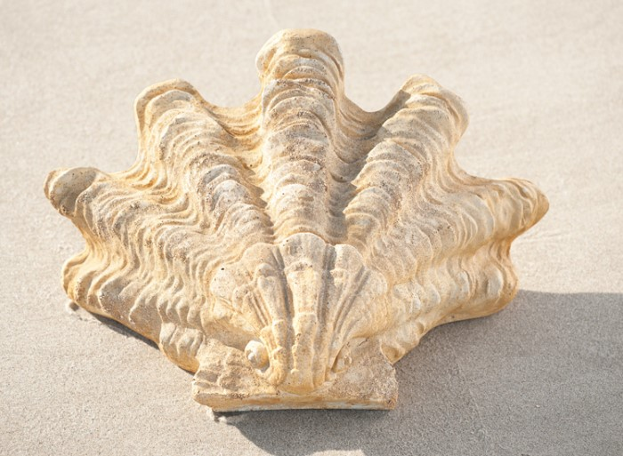 5835: Shell Sconce (Product Detail)