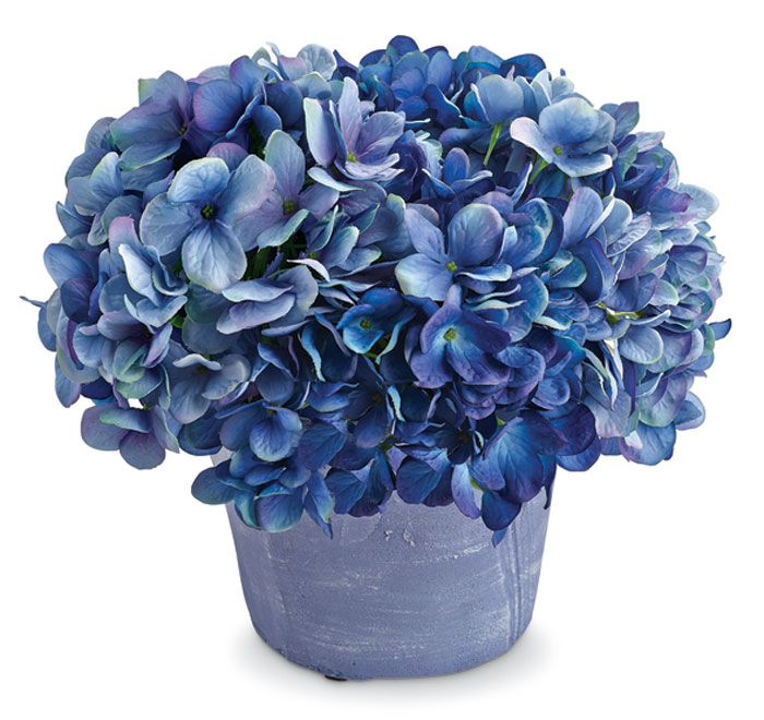 7564: Hydrangeas in Clay Pot (Product Detail)