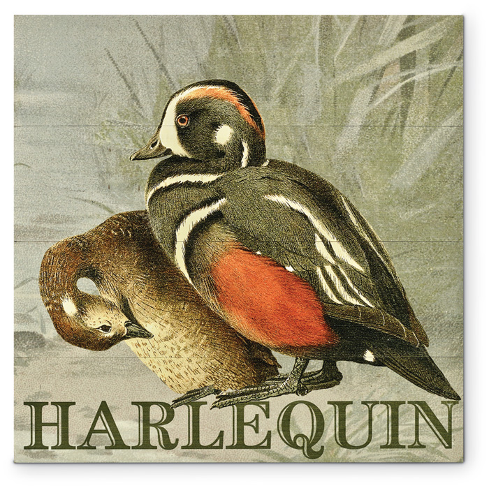 7857: Duck Wall Art - Harlequin (Product Detail)