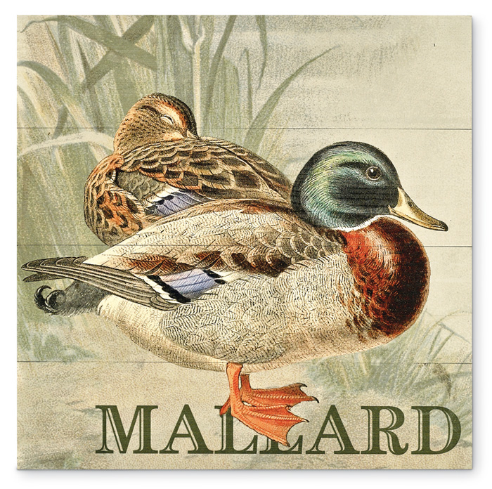 7858: Duck Wall Art - Mallard (Product Detail)