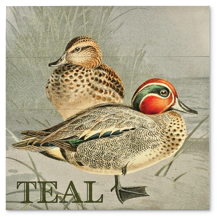 7859: Duck Wall Art - Teal (Product Detail)